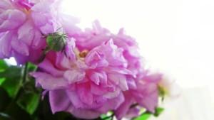 flowers-2671690__340